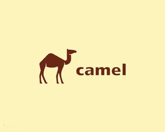 西藏拉萨骆驼